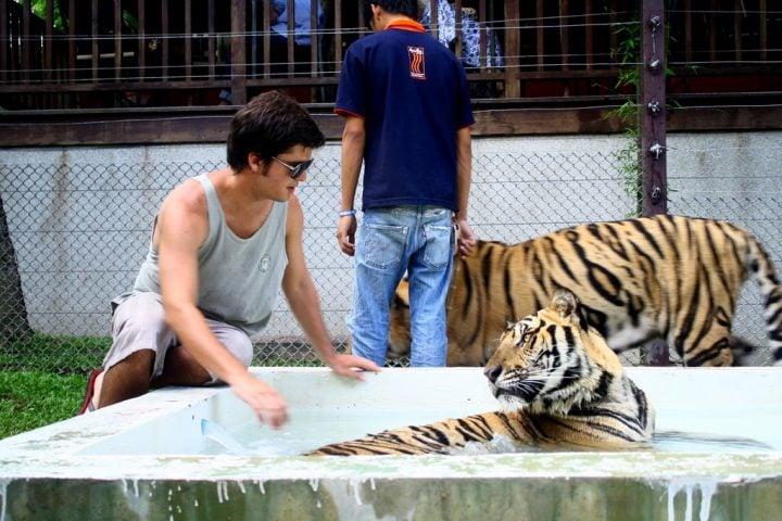 tiger kingdom tailandia