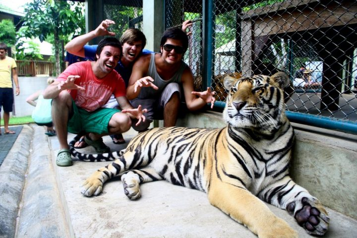 tiger kingdom tailandia