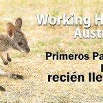 Working Holiday Australia: Primeros pasos para rec...
