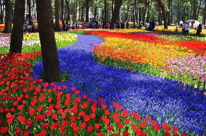 parque flores hitachi seaside park japon