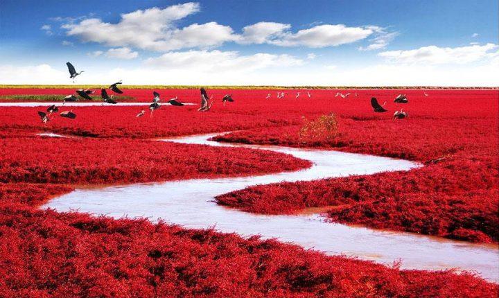 Playa Roja Panjin China