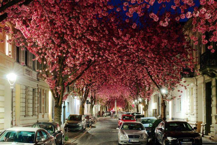 tunel cherry blossom alemania
