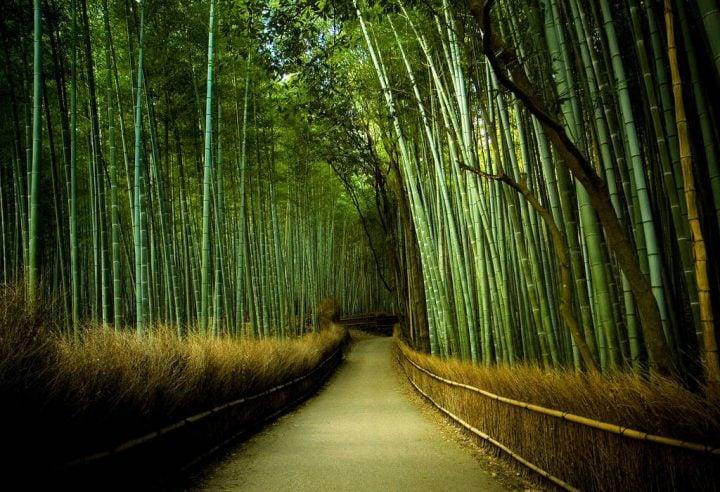 bosque de bambu japon