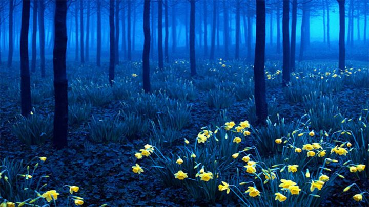 bosque negro alemania