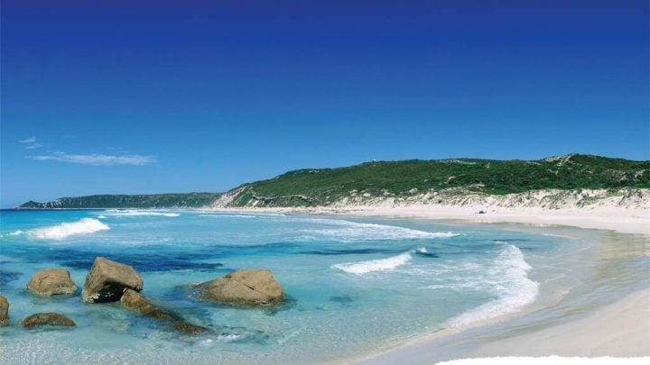 dolphin bay australia