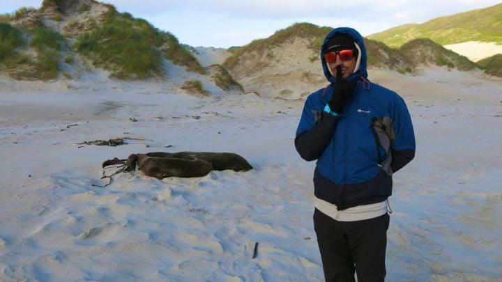 lobos marinos carlos recorre nueva zelanda