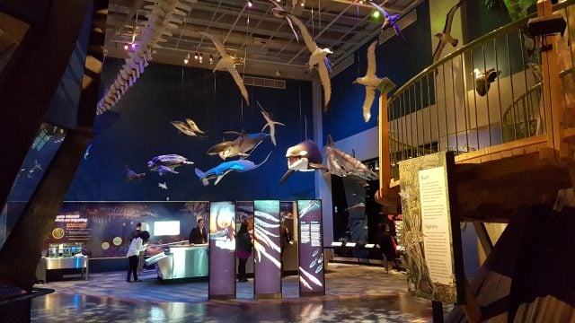 museo te papa wellington nueva zelanda