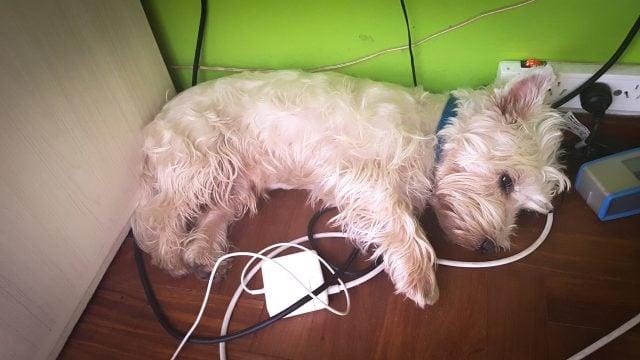 viajar mascota perro exterior