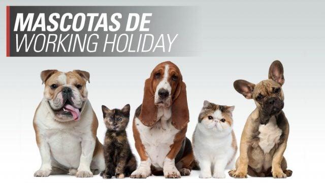 mascotas viajar al exterior llevar perro working holiday