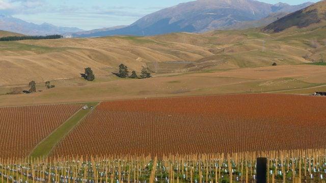 viñedos blenheim