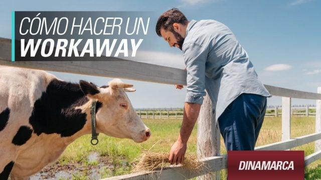 workaway-dinamarca
