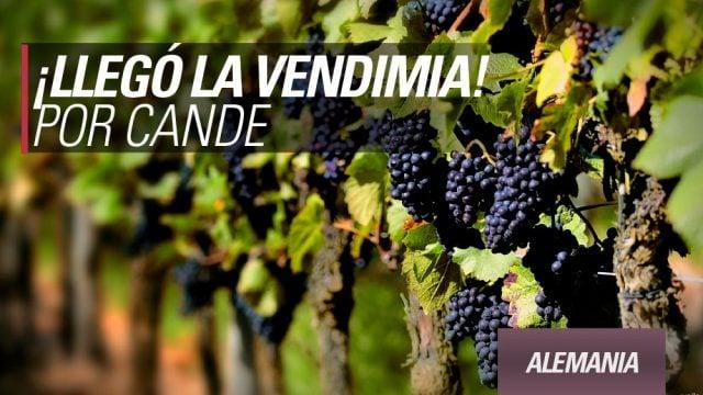 alemania working holiday trabajar experiencia viñedos