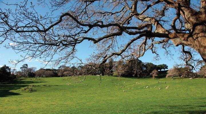 auckland parque