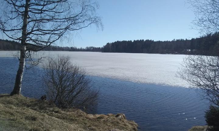 nico lago