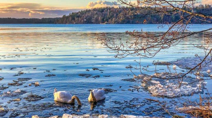 asistencia al viajero suecia